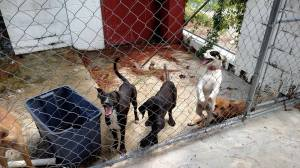 Some of the dogs killed by Mitchell Co on September 1, as posted on Facebook.