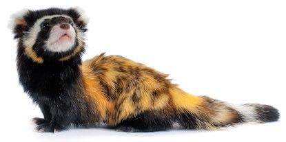 Name This Animal