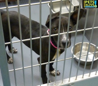 Photo by Memphis Pets Alive