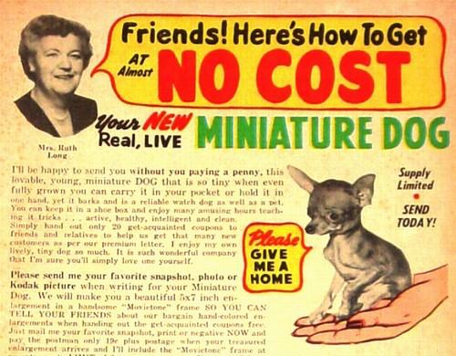 miniaturedog