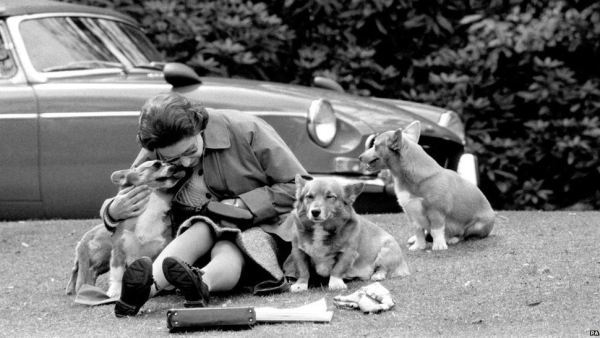 queen with corgis