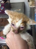 tri co as albany ky sick kitten