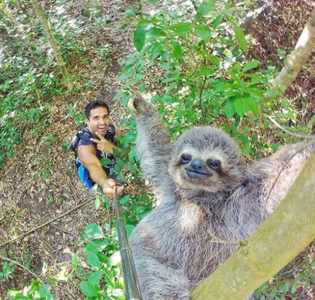 slothie-stick