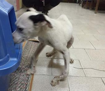 ky-shelter-study-dog-vet-care