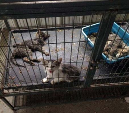 ky-shelter-study-kittens-vet-care