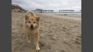 Bella, as pictured on the abc11 website.