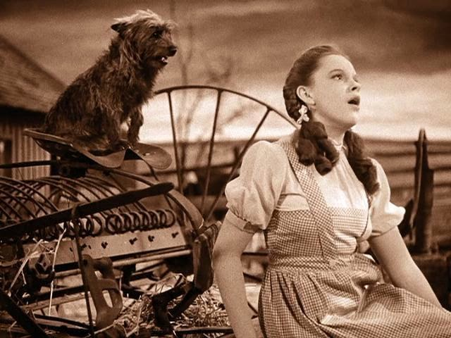 toto-and-dorothy