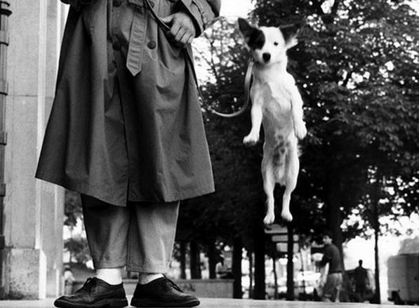 vintage-dog-photographs-by-elliott-erwitt